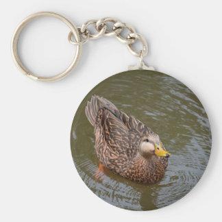 female mallard hen duck drinking water basic round button keychain