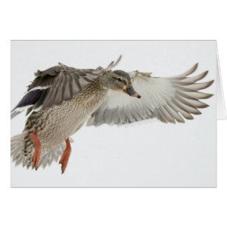 Female Mallard in Flight Blank Note Card