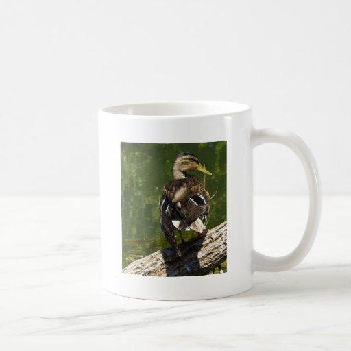 Female Mallard Mug