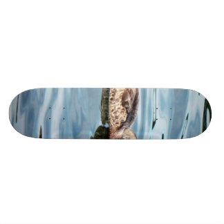 Female Mallard On Water Skate Boards