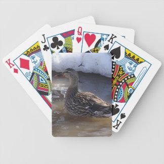 Female Mallard Card Decks
