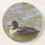 Female Mallard Swimming in Lake Drink Coaster