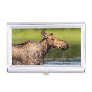 Moose business card holders cases zazzle female moose feeding in small lake business card holder colourmoves