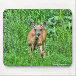 Female Mother Mule Deer on Ranch Wildlife Photo Mouse Pads