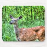 Female Mother Mule Deer on Ranch Wildlife Photo Mousepads
