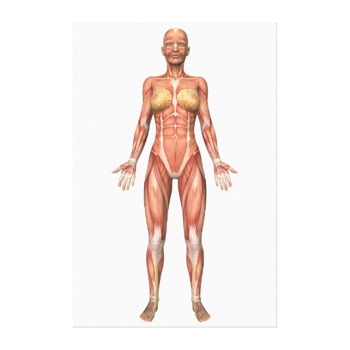 Mature muscular system