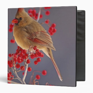 Female Northern Cardinal among hawthorn 3 Ring Binder
