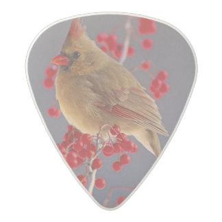 Female Northern Cardinal among hawthorn Acetal Guitar Pick