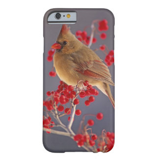 Female Northern Cardinal among hawthorn Barely There iPhone 6 Case