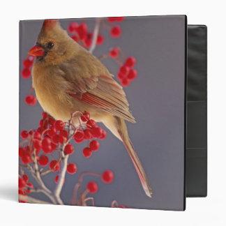 Female Northern Cardinal among hawthorn Vinyl Binders