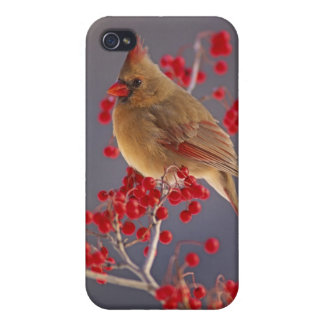 Female Northern Cardinal among hawthorn Cover For iPhone 4