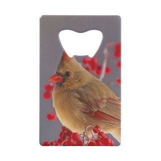 Female Northern Cardinal among hawthorn Credit Card Bottle Opener