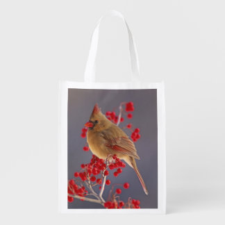 Female Northern Cardinal among hawthorn Grocery Bags