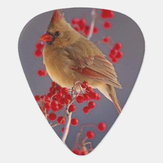 Female Northern Cardinal among hawthorn Guitar Pick