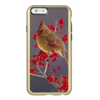 Female Northern Cardinal among hawthorn Incipio Feather Shine iPhone 6 Case