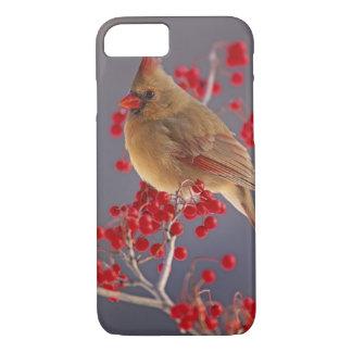 Female Northern Cardinal among hawthorn iPhone 7 Case