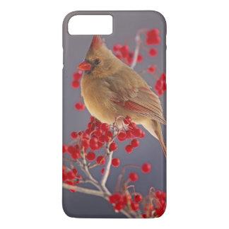 Female Northern Cardinal among hawthorn iPhone 7 Plus Case