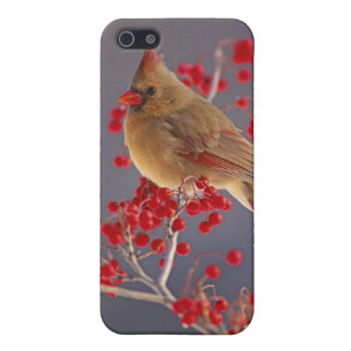 Female Northern Cardinal among hawthorn iPhone SE/5/5s Cover