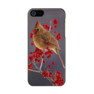 Female Northern Cardinal among hawthorn Metallic Phone Case For iPhone SE/5/5s