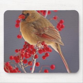 Female Northern Cardinal among hawthorn Mouse Pad