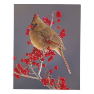 Female Northern Cardinal among hawthorn Panel Wall Art