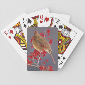 Female Northern Cardinal among hawthorn Poker Cards