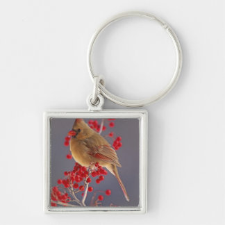 Female Northern Cardinal among hawthorn Silver-Colored Square Keychain