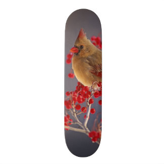 Female Northern Cardinal among hawthorn Skateboard Deck