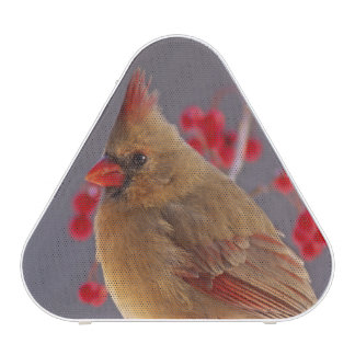 Female Northern Cardinal among hawthorn Speaker