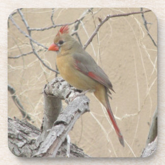 Female Northern Cardinal Coasters