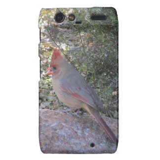 Female Northern Cardinal Droid Razr Case