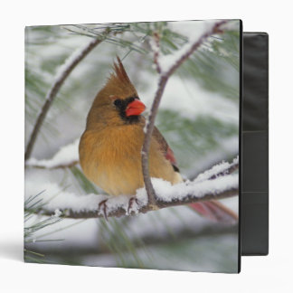 Female Northern Cardinal in snowy pine tree, 3 Ring Binder