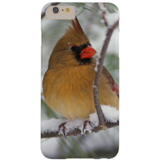 Female Northern Cardinal in snowy pine tree, Barely There iPhone 6 Plus Case
