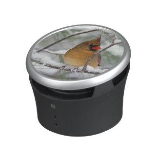 Female Northern Cardinal in snowy pine tree, Bluetooth Speaker