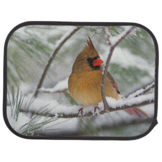 Female Northern Cardinal in snowy pine tree, Car Mat