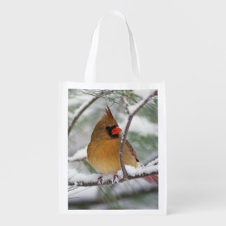 Female Northern Cardinal in snowy pine tree, Grocery Bag