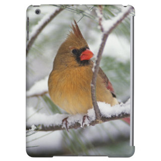 Female Northern Cardinal in snowy pine tree, iPad Air Cover