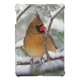 Female Northern Cardinal in snowy pine tree, iPad Mini Cover