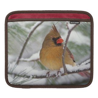 Female Northern Cardinal in snowy pine tree, iPad Sleeves