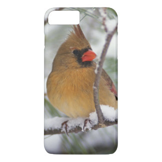 Female Northern Cardinal in snowy pine tree, iPhone 8 Plus/7 Plus Case