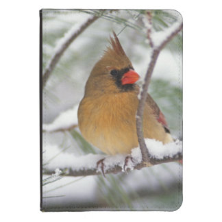 Female Northern Cardinal in snowy pine tree, Kindle 4 Cover