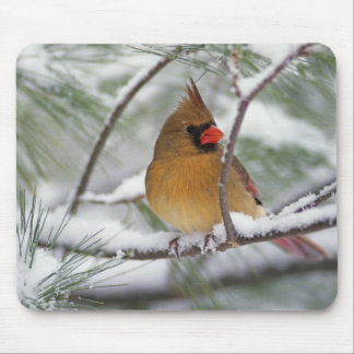 Female Northern Cardinal in snowy pine tree, Mouse Pad