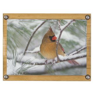 Female Northern Cardinal in snowy pine tree Rectangular Cheeseboard
