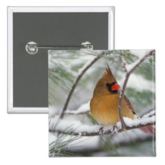 Female Northern Cardinal in snowy pine tree, Pinback Button