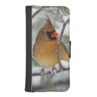 Female Northern Cardinal in snowy pine tree, iPhone 5 Wallet Case