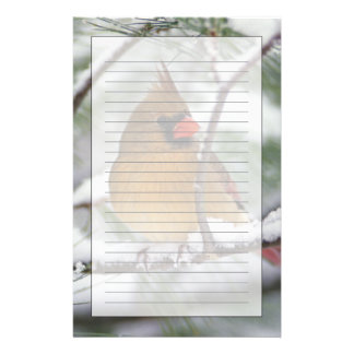 Female Northern Cardinal in snowy pine tree, Stationery