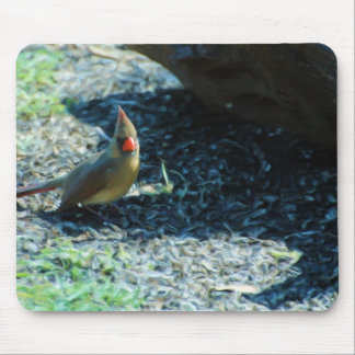 Female Northern Cardinal Mouse Pad