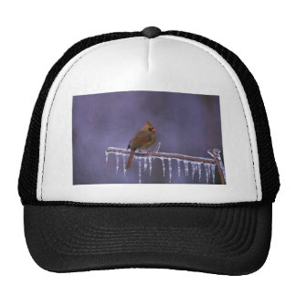 Female Northern Cardinal on Frozen Branch Trucker Hat