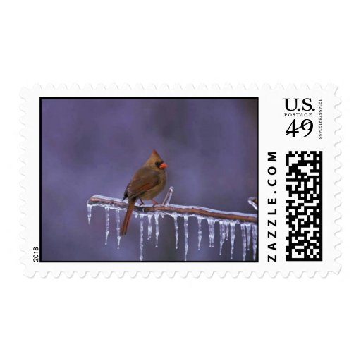 Female Northern Cardinal on Frozen Branch Stamp