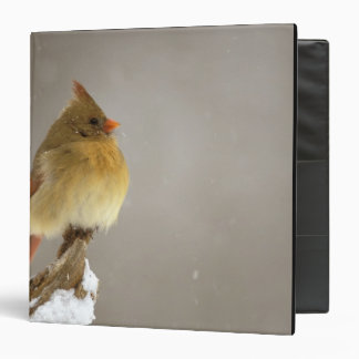 Female northern Cardinal on snow covered Binder